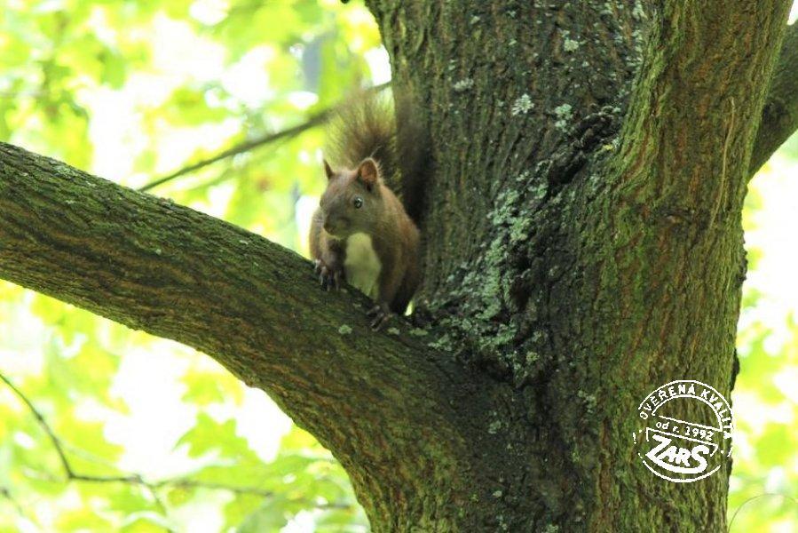 Foto Zámecká zahrada a opičky Teplice