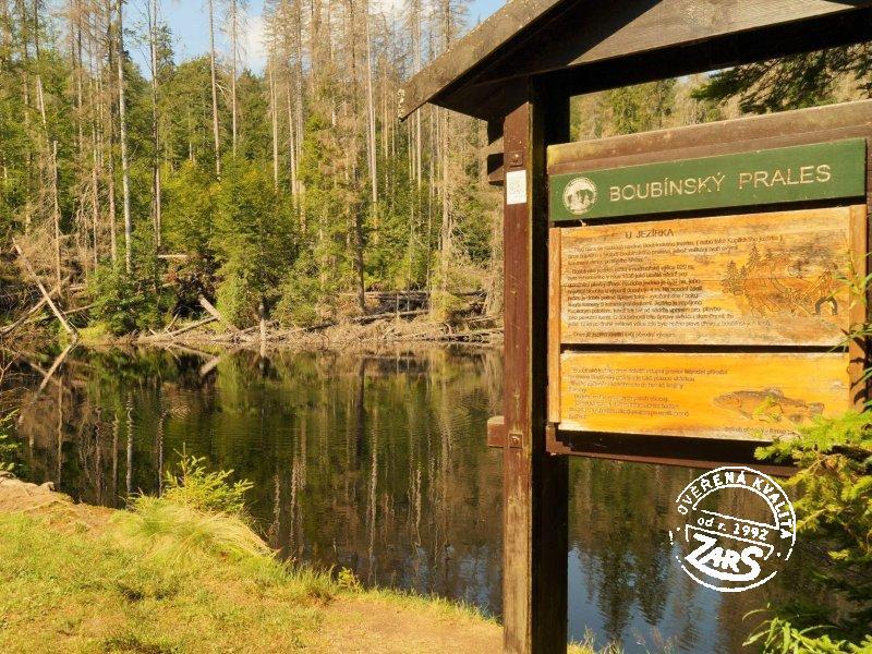 Foto Národní přírodní rezervace Boubínský prales
