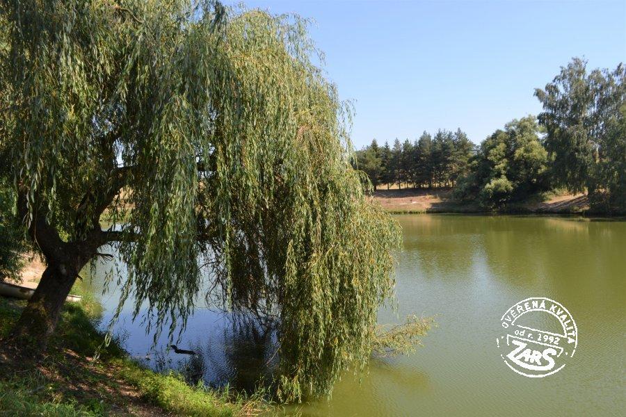 Foto Ruprechtovský rybník